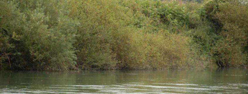La Marne est sauvage et naturelle aux abords de Meaux