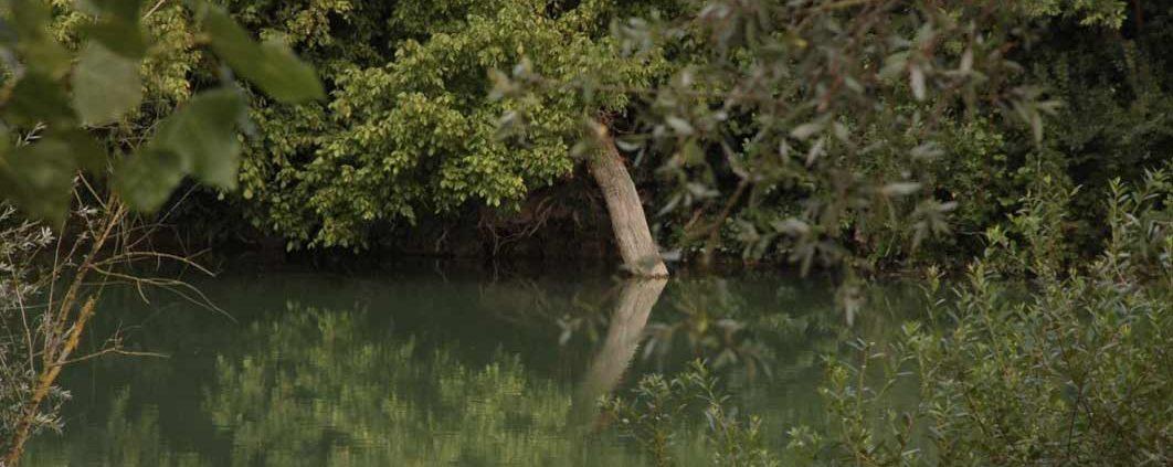 Découvrez la faune et la flore de la Marne avec Marin D'Eau Douce