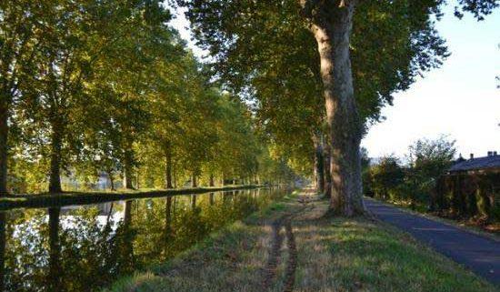 Itinéraire 6H - Balade en bateau sans permis vers Ostwald - itinéraire nature