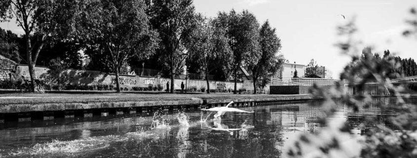 Itinéraire sur la Marne, une faune très présente