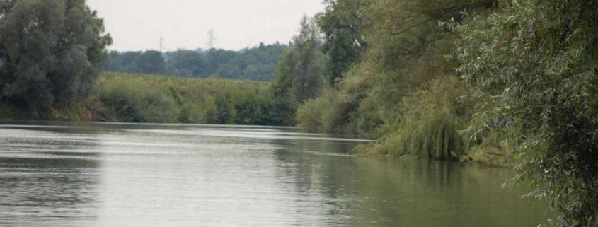 Une nature riche et variée que l'on observe sur les bords de Marne depuis un bateau électrique silencieux